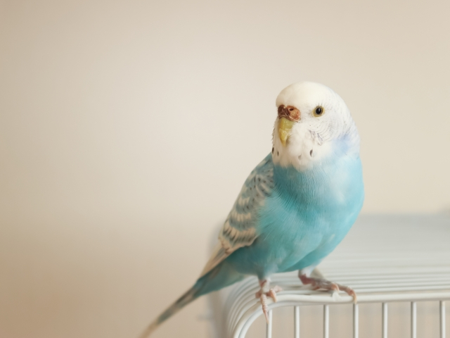 注意喚起!アロマのデュフューザーを使い小鳥を飼っている方注意が必要!