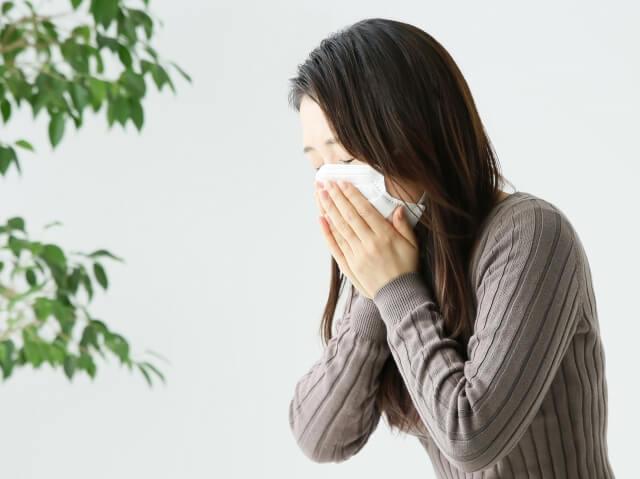 花粉症 杉花粉